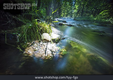 Forest, River, Morning