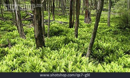 Australia, Eucalypt Forest