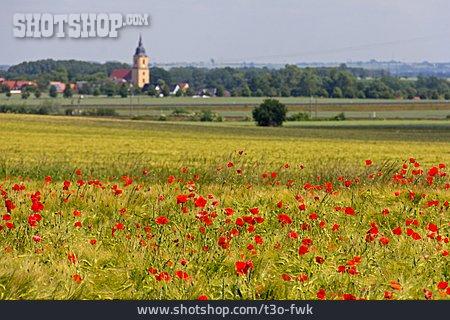 Village, Poppies Flowers, Rural Scene