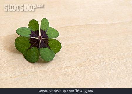 Four Leafed Clover, Cloverleaf