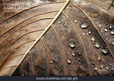 Leaf, Autumn Leaves