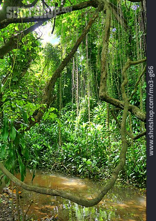 Jungle, Tropical