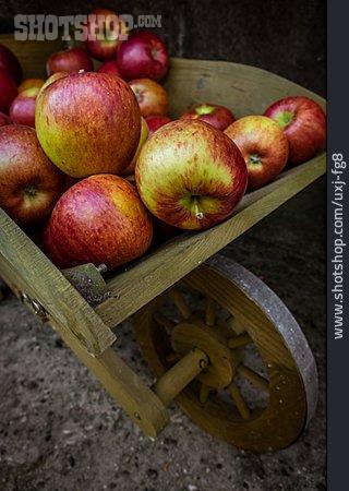 Harvest, Apples
