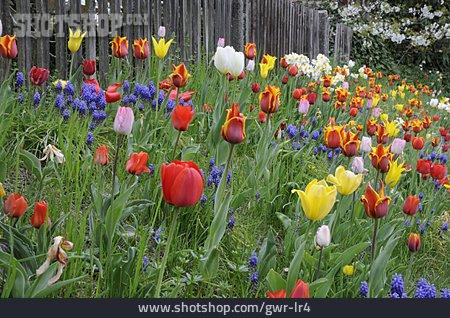 Spring, Flower Meadow, Meadow