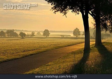 Pasture, Sunrise, Fog