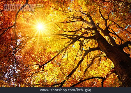 Sunbeams, Autumn, Treetop