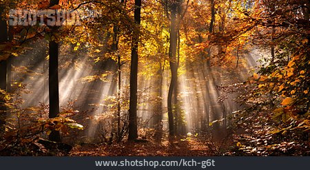 Autumn, Sunbeams, Autumn Light