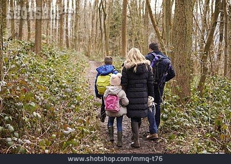 Forest, Walk, Walk