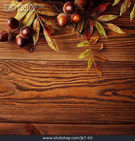 Copy Space, Autumn, Acorns