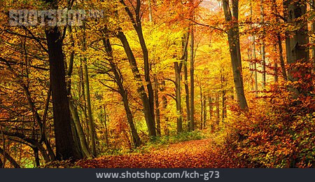 Autumn, Deciduous Forest, Indian Summer