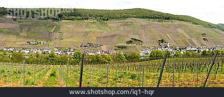 Viticulture, Moselle Valley, Vineyard