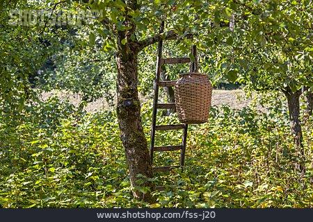 Fruit Harvest, Apple Harvest