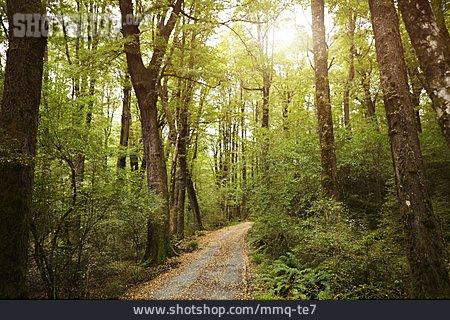 Path, Deciduous Forest