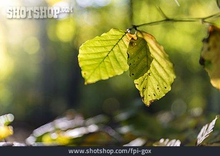 Nature, Twig, Leaves