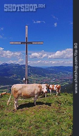 Cow Herd, Isartal, Brauneck