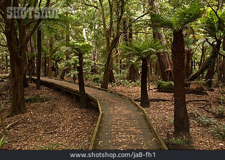 Trail, Rainforest, Tree Fern, Lilly Pilly Gully Circuit