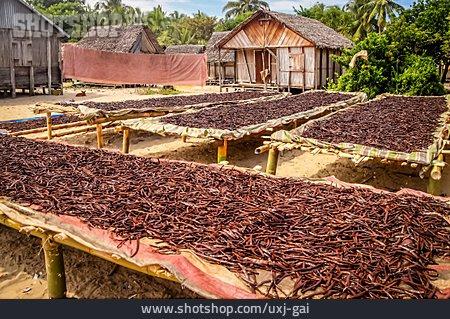 Harvest, Plantation, Vanilla Pods