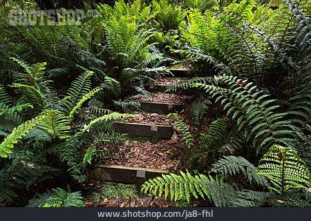 Trail, Fern, Rainforest