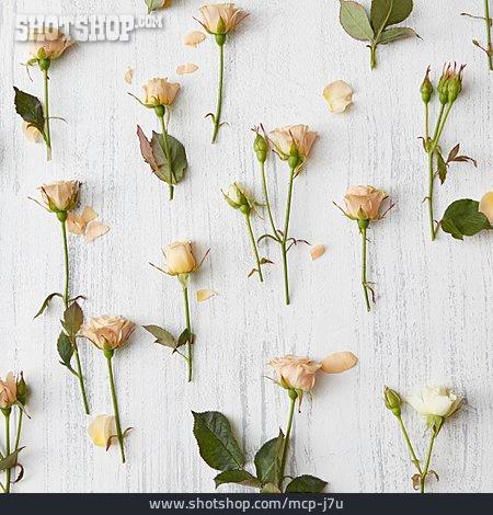 Romantic, Roses, Floral
