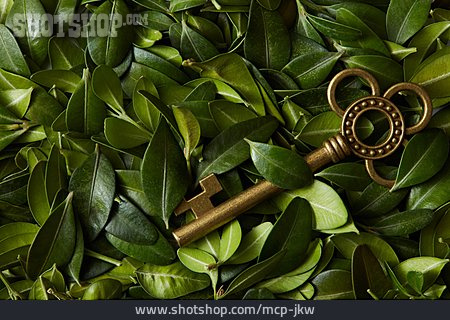 Secret, Key, Bay Leaf, Bay Tree
