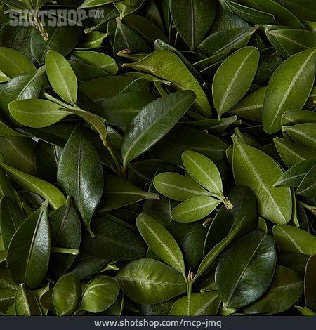 Full Frame, Leaves