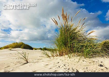 Sand, Marram Grass