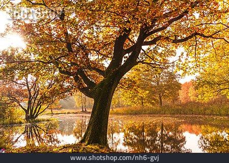 Autumn Forest, Tree