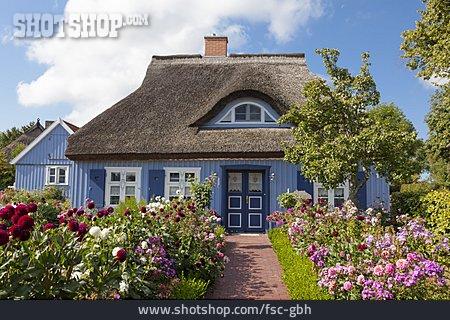 House, House, Thatch Roof, Fischland Darß Zingst