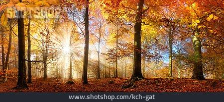 Autumn Forest, Sun