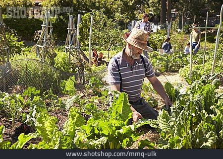 Gardening, Gardener, Gardening
