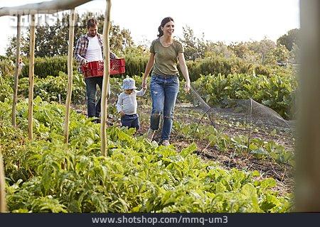 Family, Vegetable Harvest, Vegetable Box