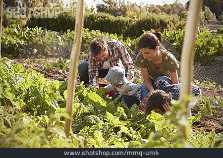 Family, Together, Vegetable Harvest