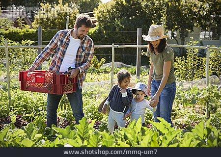 Family, Self Supporter, Vegetable Harvest