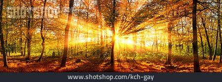 Forest, Sunbeams, Indian Summer
