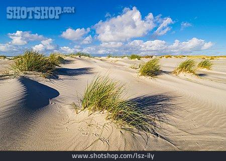 Dune, Marram Grass