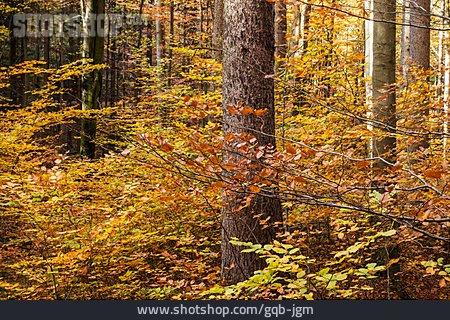 Autumn, Deciduous Forest