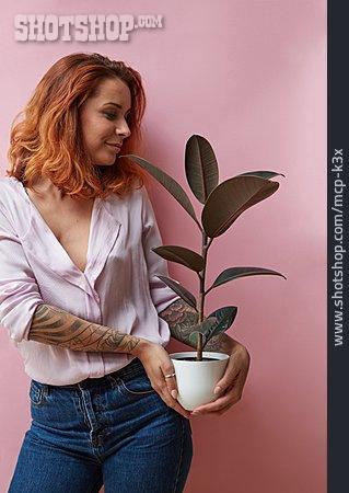 Rubber Tree, Florist