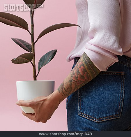 Potted Plant, Rubber Tree