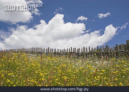 Flower Meadow, Fence, Pale Fence