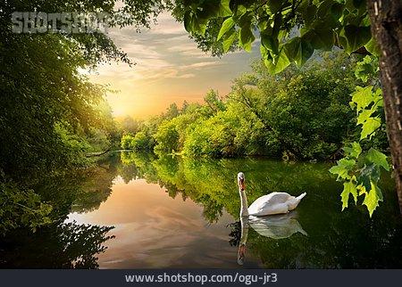Nature, Lake, Swan, Enchanted