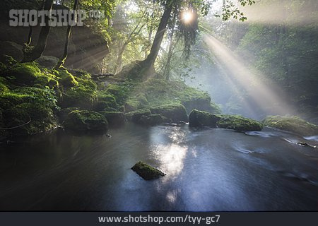 Backlighting, Stream, Forest