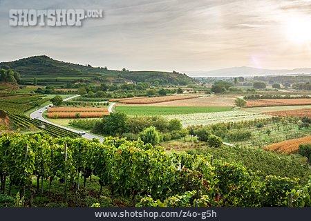 Wine-growing Region, Kaiserstuhl
