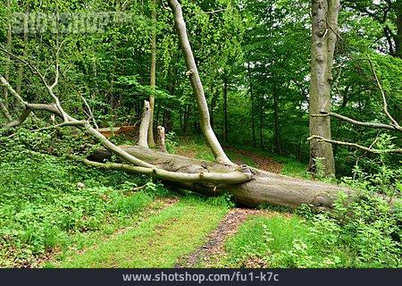 Storm Damage, Tree Damage