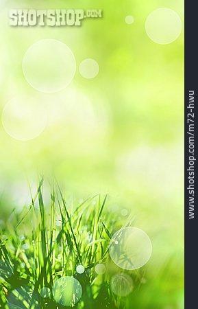 Grass, Spring, Sunny