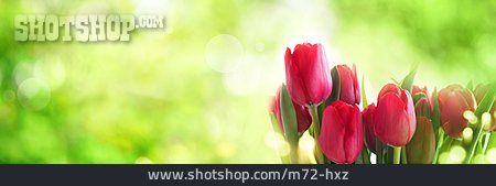 Tulips Bouquet, Spring