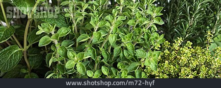 Herb, Spice Plant, Culinary Herbs
