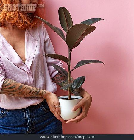 Houseplant, Trend, Rubber Tree