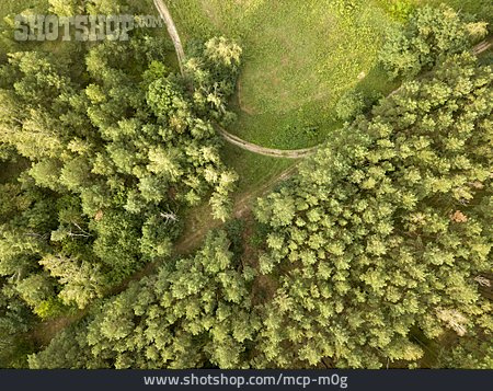 Forest, Treetop, Green Lung