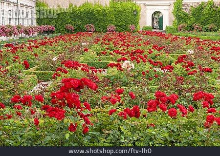 Rose Garden , Castle Mirabell