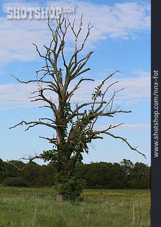 Deadwood, Tree Skeleton